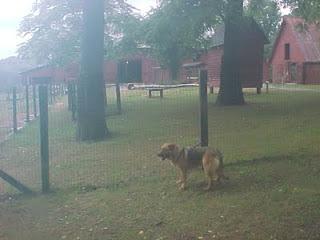 Rayna at the barn at Carl Sandburg's home.