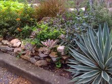 Low Water Tolerant Landscape