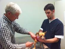 Dr. Kothmann innoculates Trixie