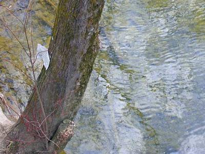 tree at river