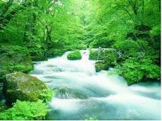 Vamos preservar a natureza!