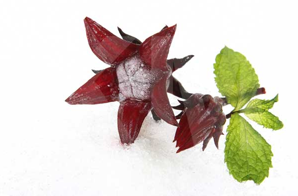 Цветы берберы фото 5