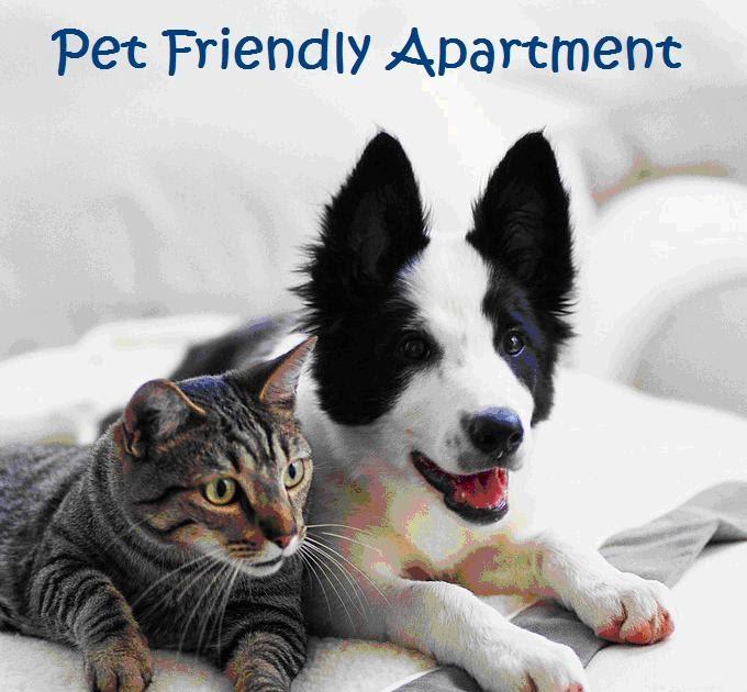 Pet Friendly Hotels Florida Beach