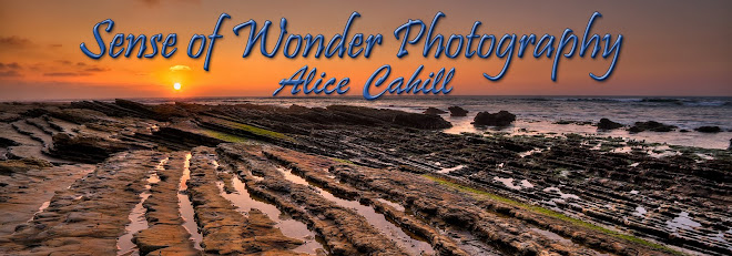 Sense of Wonder Photography