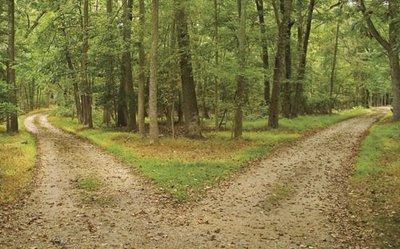 [woods.jpg]