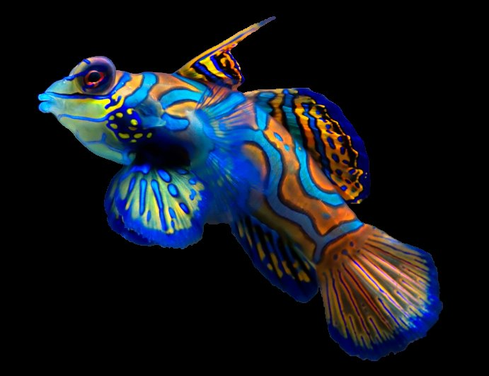 Top 10 peces mas hermosos del mundo taringa - Los peces mas bonitos del mundo ...