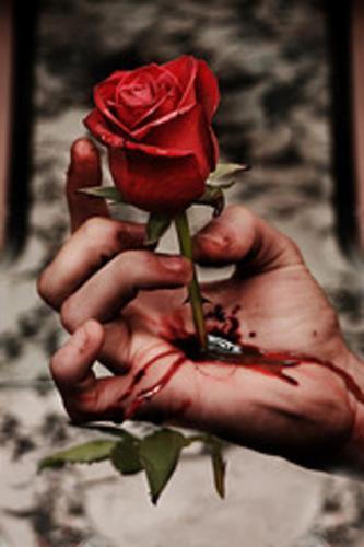 las rosas son lindas