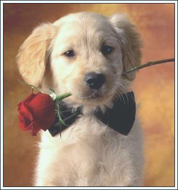 [perros+fiore+1.jpg]