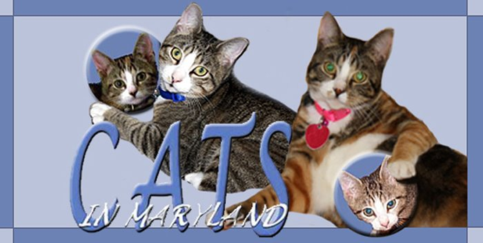 Cats in Maryland