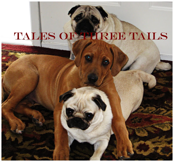 Tales of Three Tails