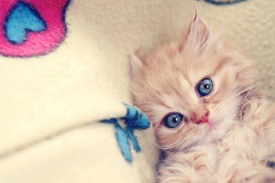 Blog de laahsapphire : sweet teen, Imagens fofas para tumblr
