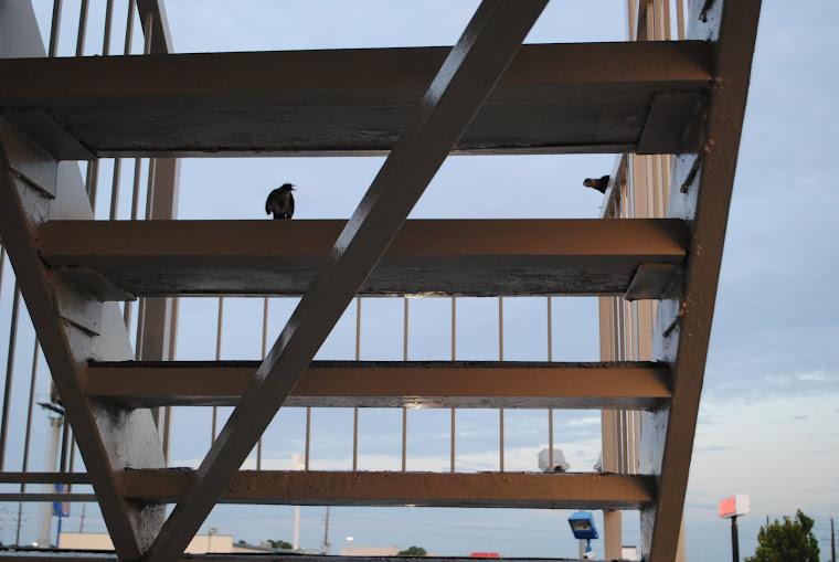 primo risveglio al motel dell'aeroporto di houston, texas