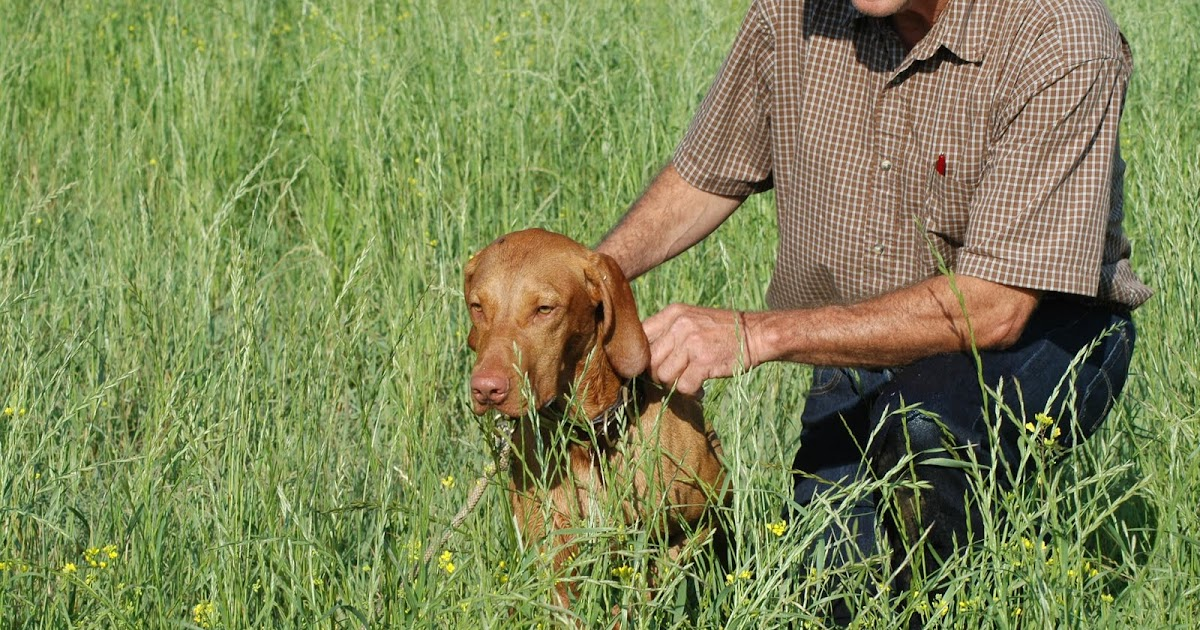 redbirddog - a hungari...