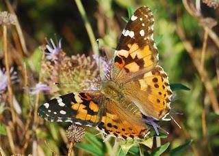 ButterflyNaut?