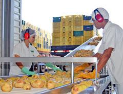 Oferta de Fabricas Istalada Procesamiento de Frutas p/ Su Negocio Propio. SALON EMPRENDEDOR ECUADOR