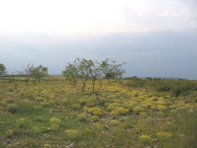 Almendreras en un campo albandonau