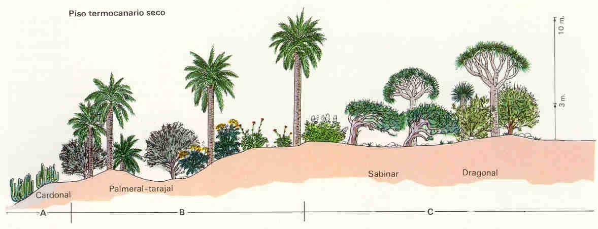 Geograf a canarias for Pisos de vegetacion canarias