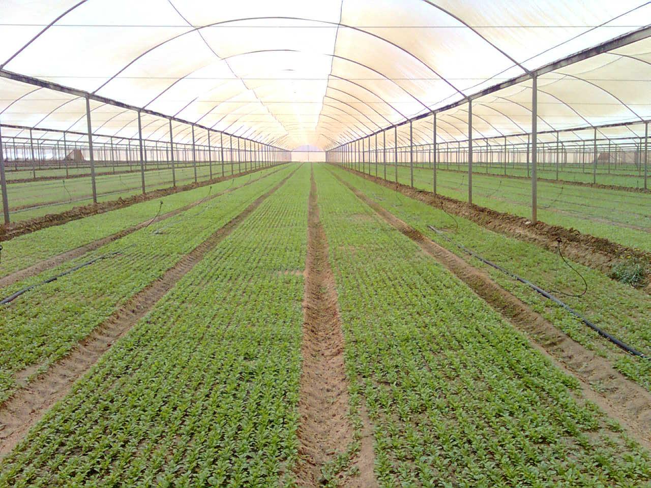 Massima efficienza irrigua la combinazione di irrigazione for Sistema irrigazione a goccia
