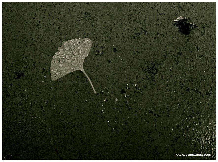 [19.1_Falling-Leaves.JPG]