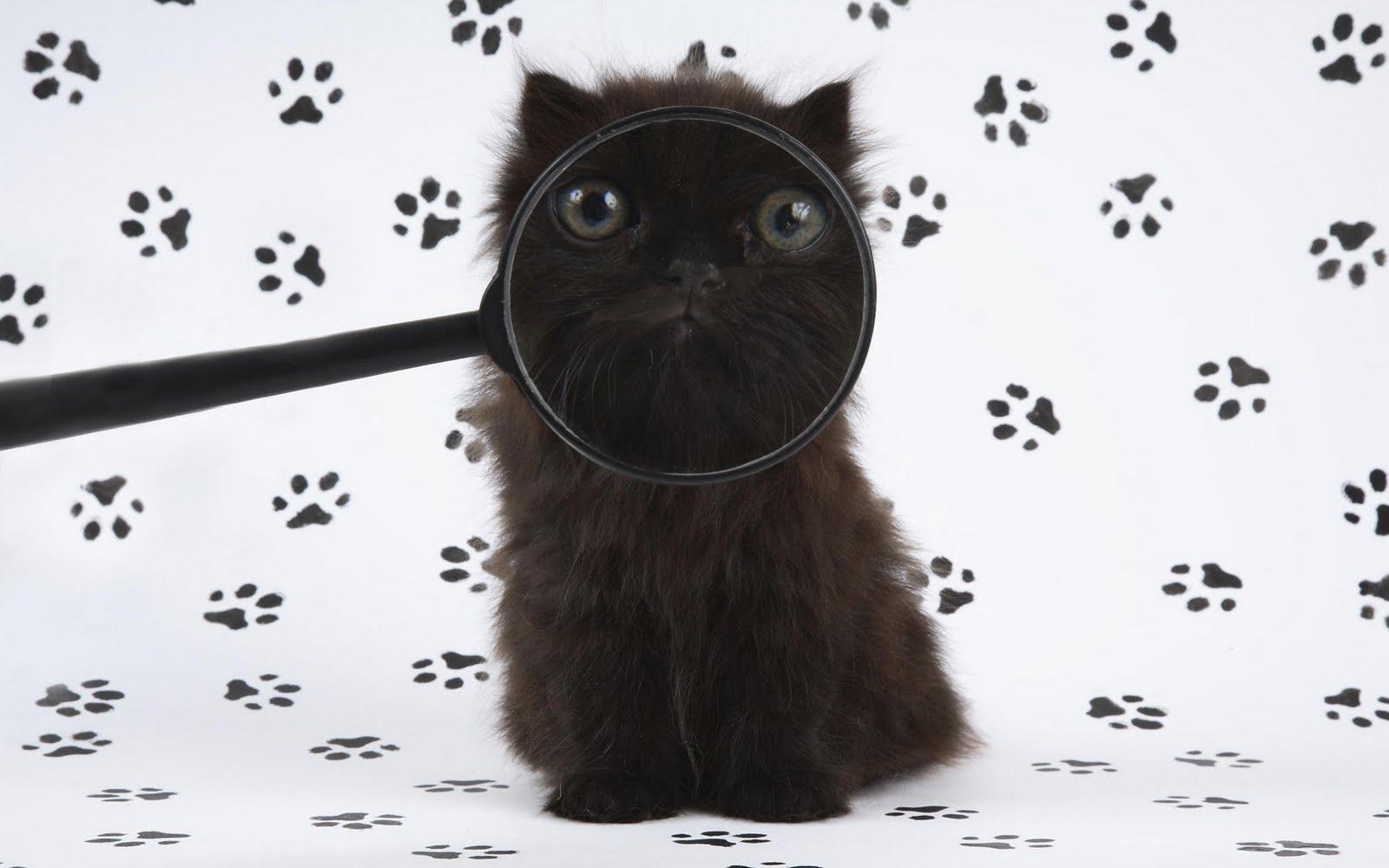 http://3.bp.blogspot.com/_KLJU3hHDGVM/S-lC_f6Wp9I/AAAAAAAAB-o/dkP6X6uVOgY/s1600/cats+%287%29.jpg