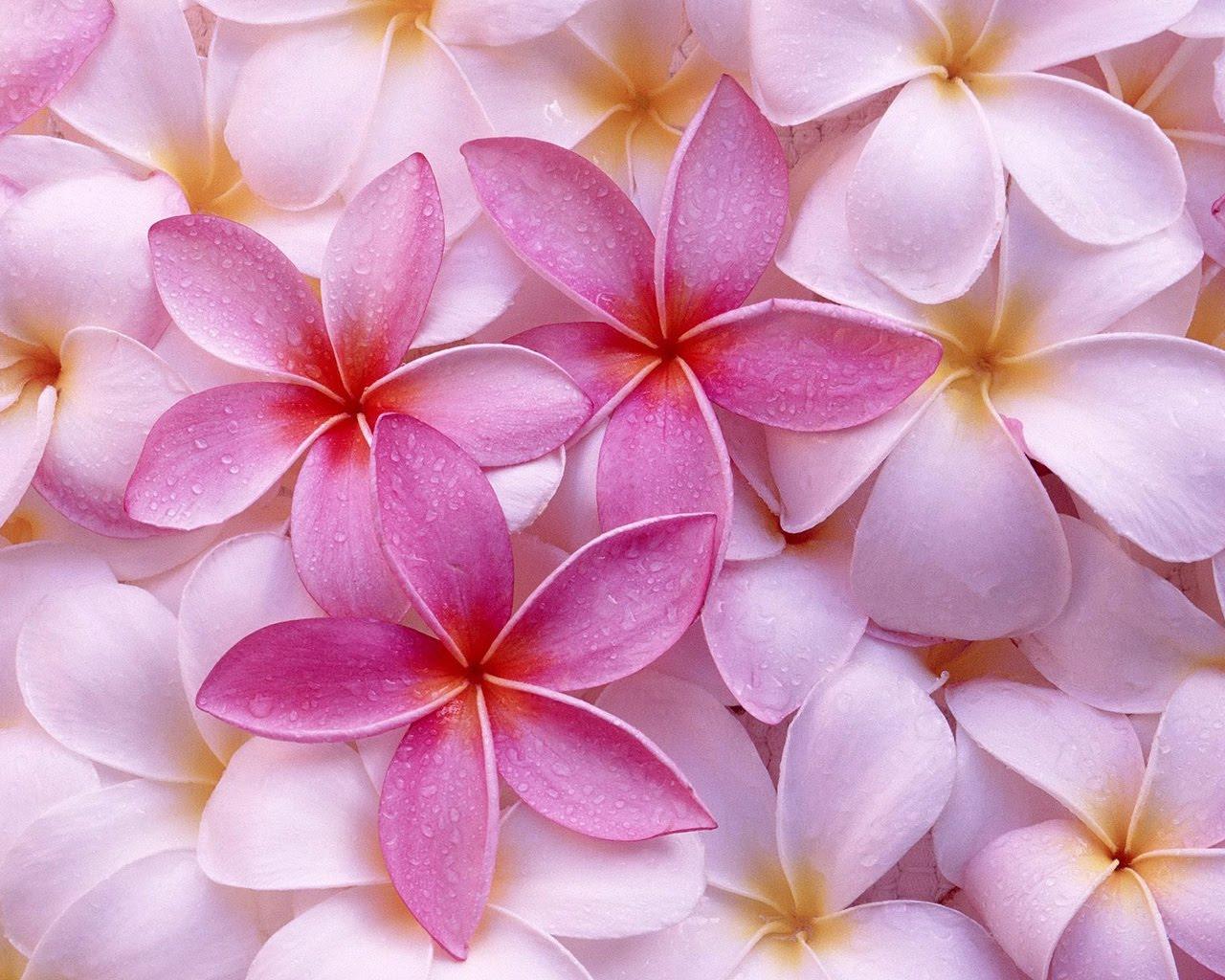 Paisajes De Flores Hermosas