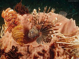 underwater sea creatures