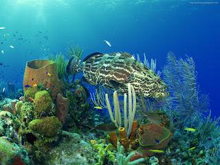 under sea pictures