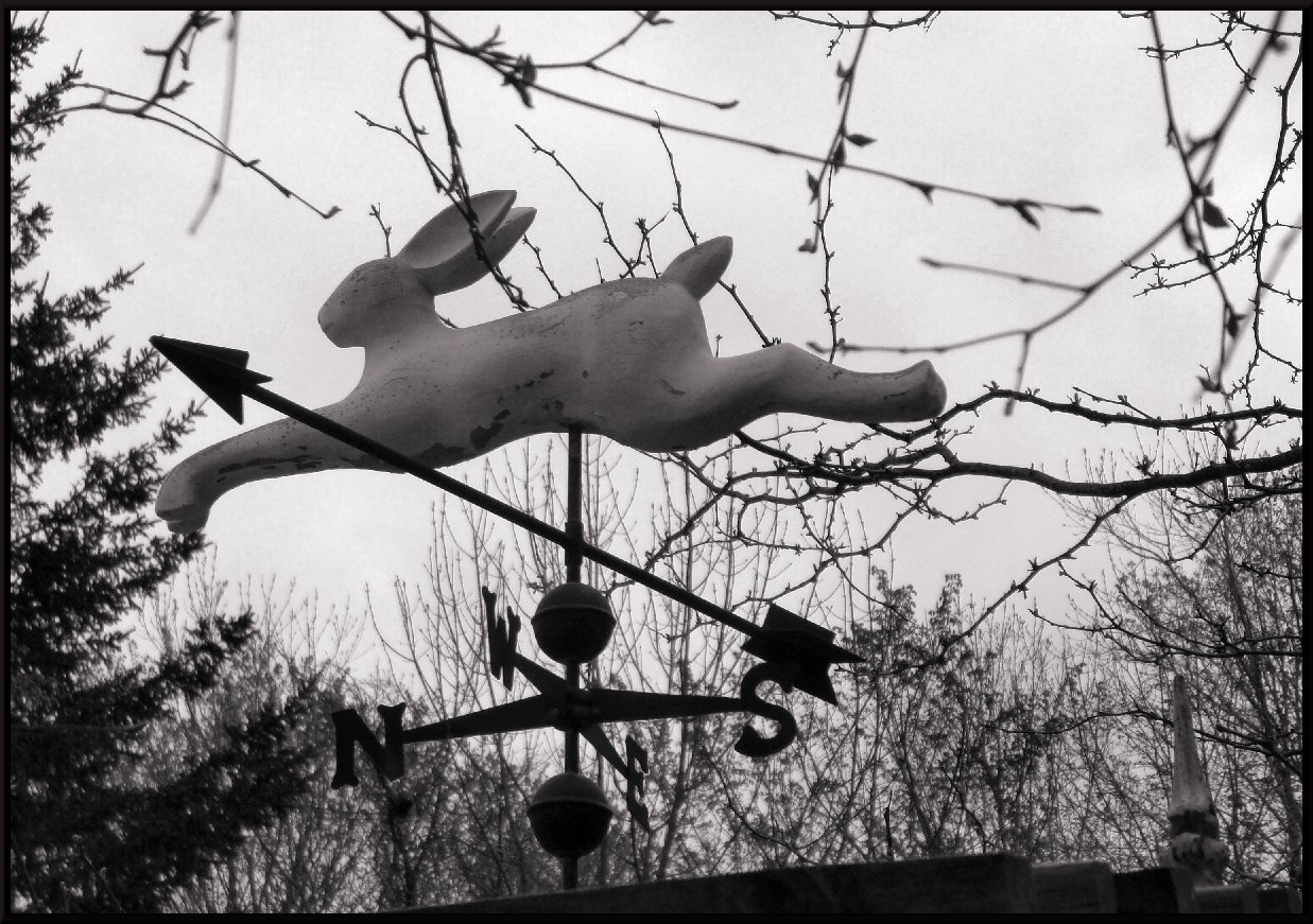 rabbit weather vane photo image