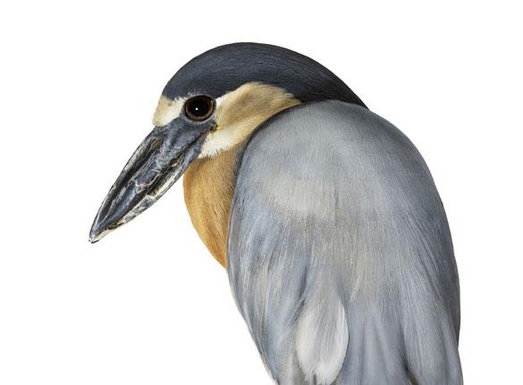 [bird1]