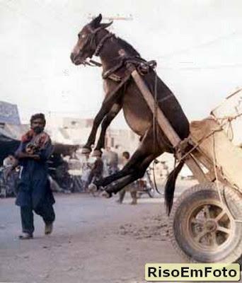 Acidentes: burro mais leve que a carroça