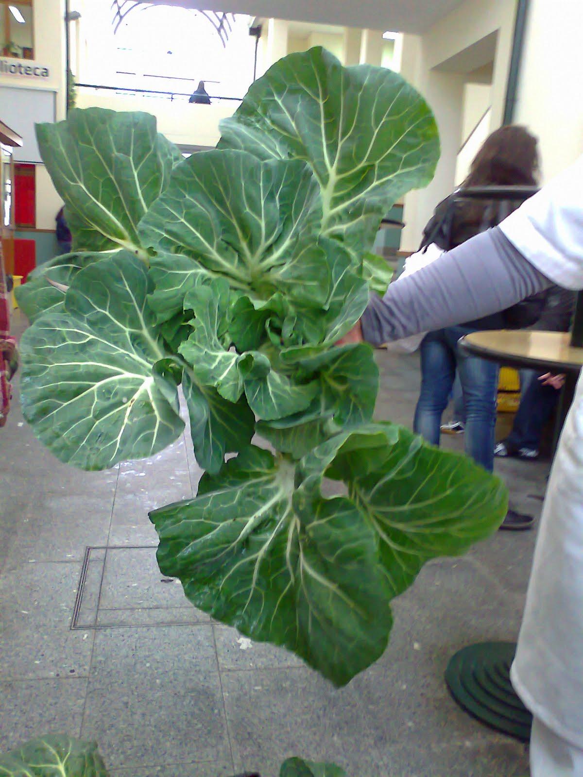 vegetais horta jardim e pomar: Levante: A nossa horta, o nosso pomar, o nosso jardim e a nossa sopa