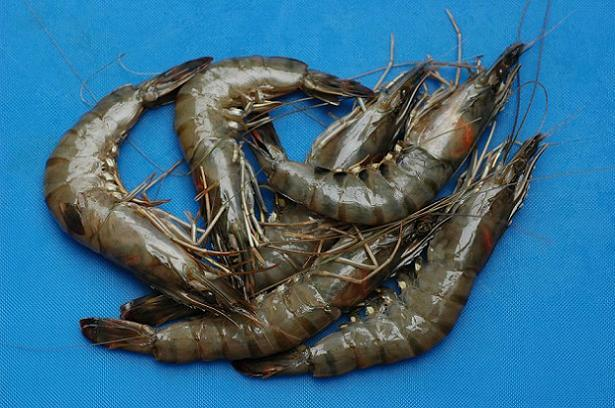 Madagascan tiger prawns from Waitrose