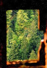 05-12.10.2008 FOTOĞRAFI