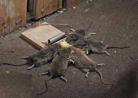 We\'re At Dad\'s That Week: Three Blind Mice