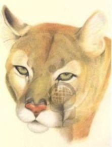 Ilustración Cientifica de flora y fauna