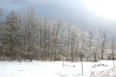 Valentine's Day Ice storm on Droop Mountain, 2007