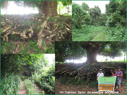 Journey to Emajagua