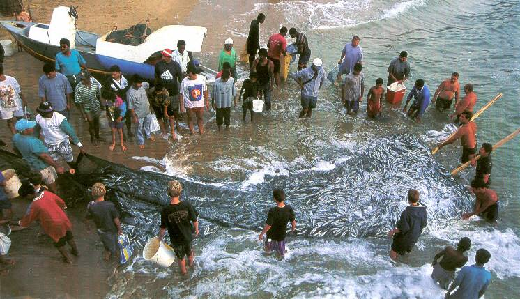 the sardine run south africa