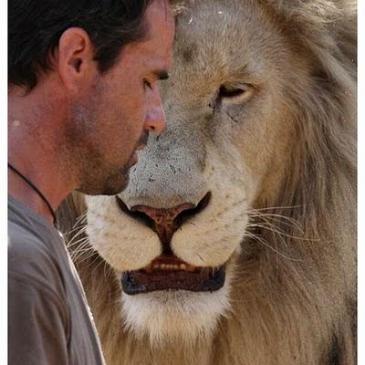 white lion love: