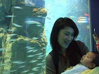 So this is the aquarium!