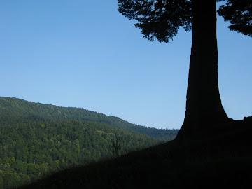 copacul solitar