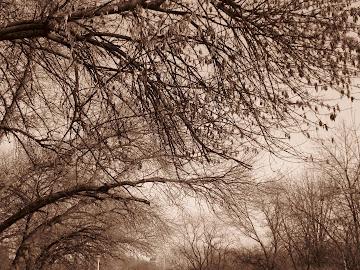 brate de copaci