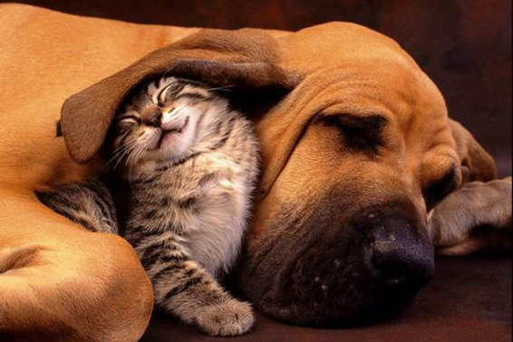 tendresse-chien_petitchat