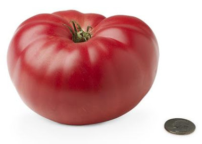 http://3.bp.blogspot.com/_KYH27OTWfLU/SDOXt156HyI/AAAAAAAAB-Y/gMAWbxbC8xo/s400/19-heirloom-tomato.jpeg