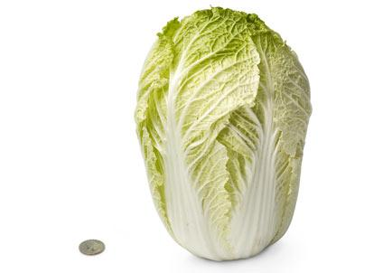 [28-chinese-cabbage.jpeg]