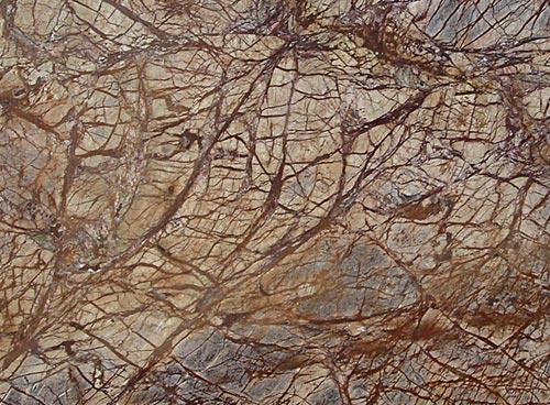Rainforest Brown Granite : The stone marble
