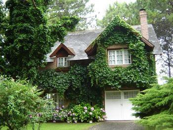 Fachadas vegetales fachadas de casas con plantas verdes for Fachadas con plantas trepadoras