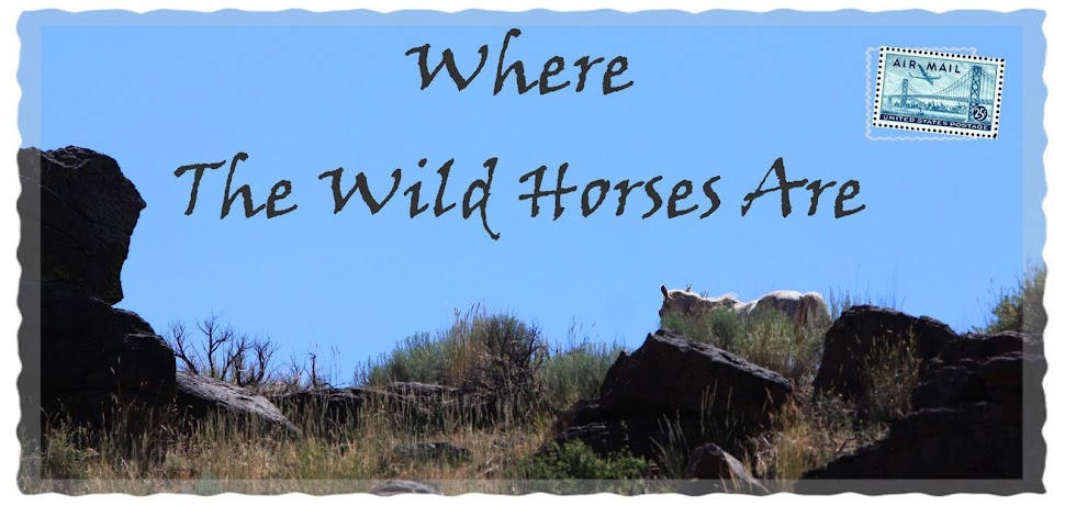 Where The Wild Horses Are