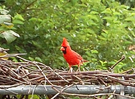 [Cardinal]