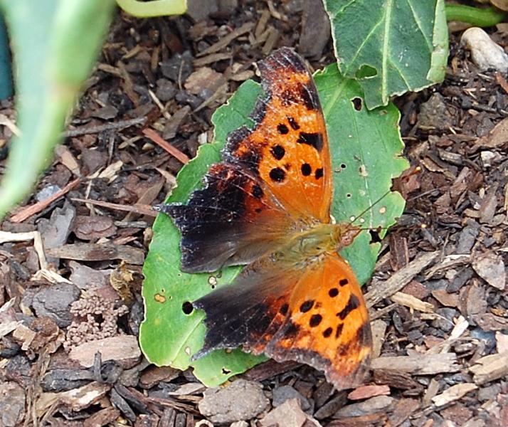 [Orange+Butterfly]